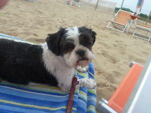 Elba Urlaub mit Hund, Elba Ferienhaus mit Hund, Elba erienwohnung mit Hund, Hund an Straund