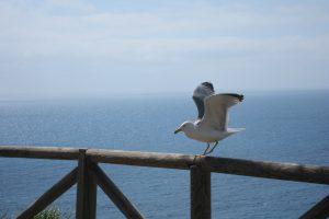 Elba-Urlaub, Möwe am Meer, Elba Ferien, Sonne